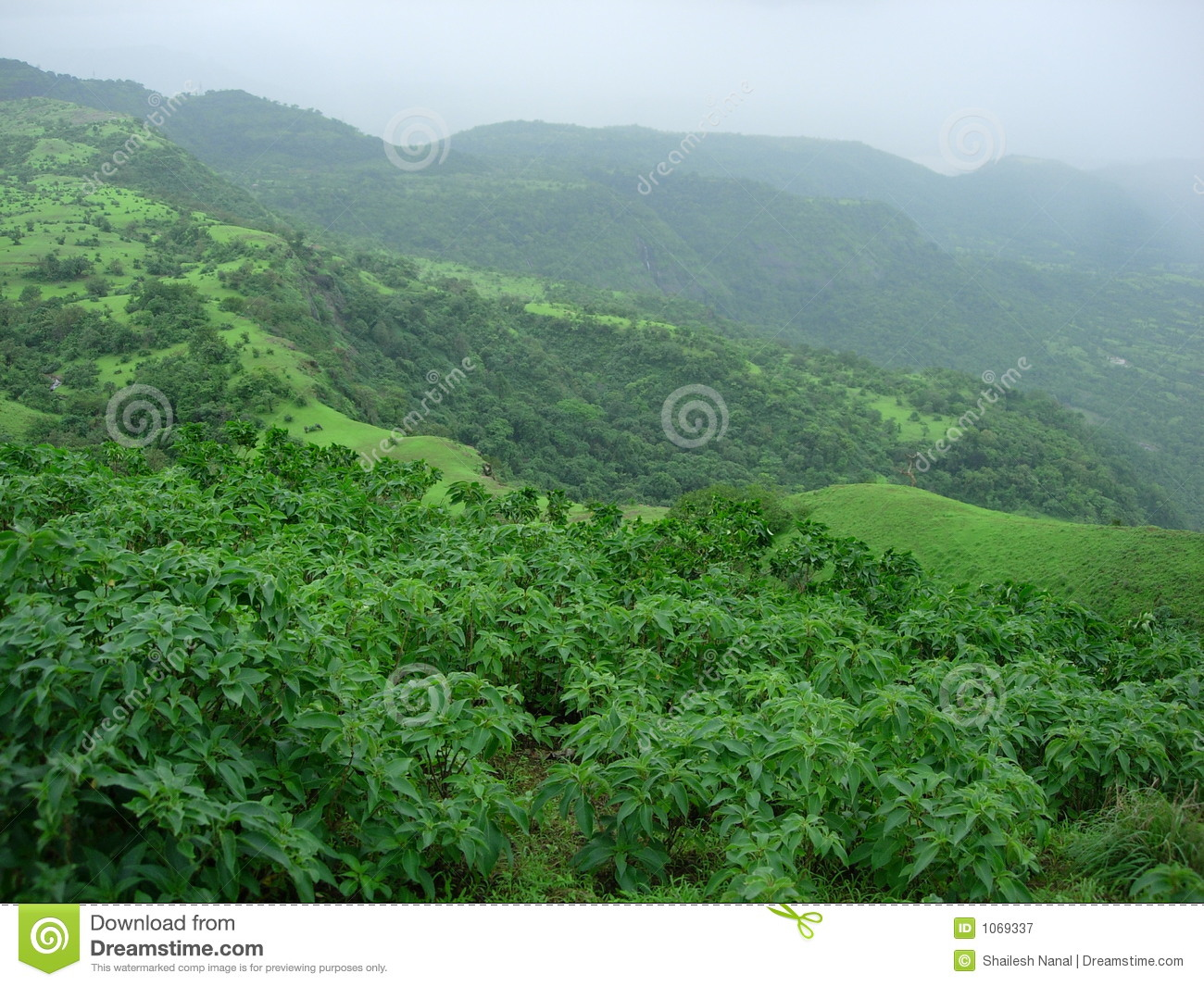 Lush Green Landscape Royalty Free Stock Photography