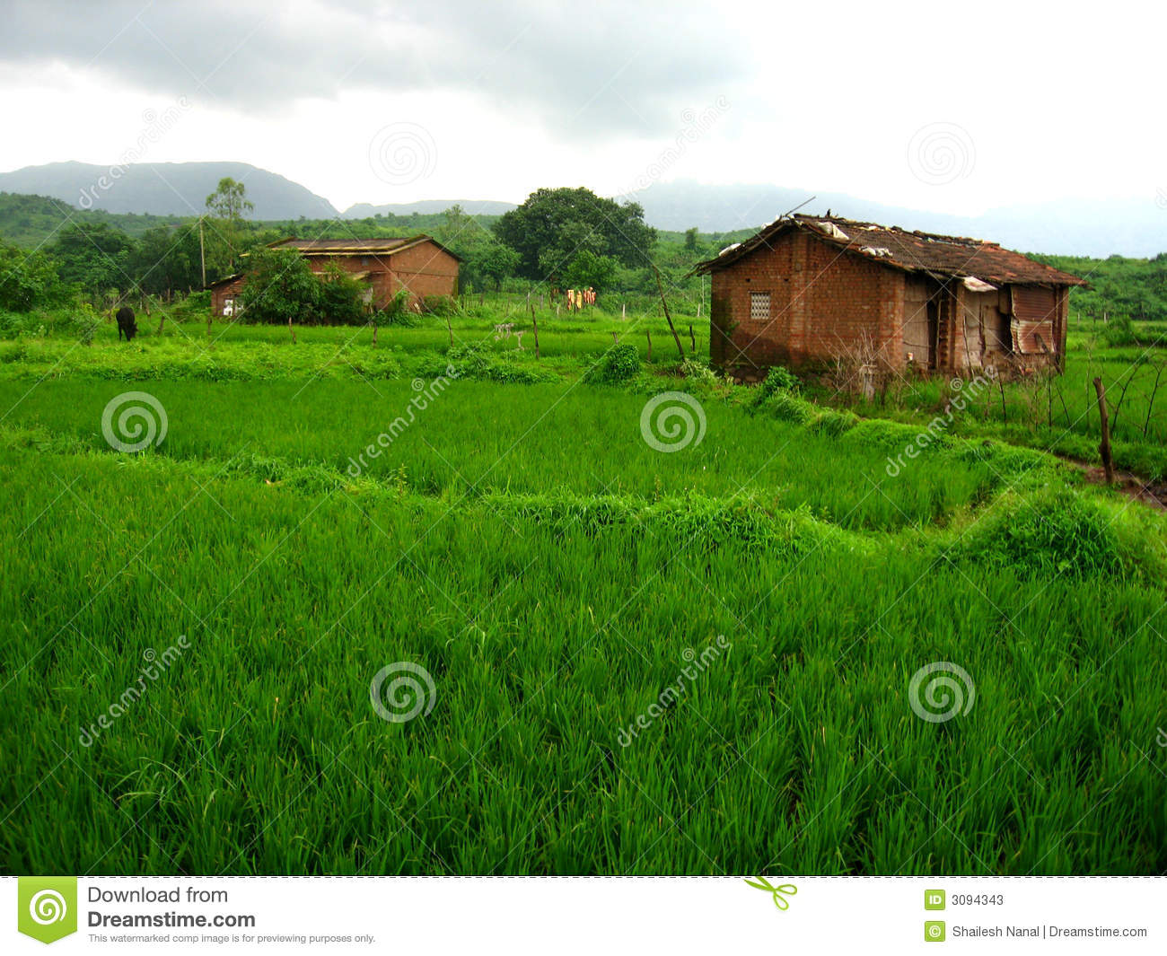 Lush Green Landscape Stock Photos Image 3094343