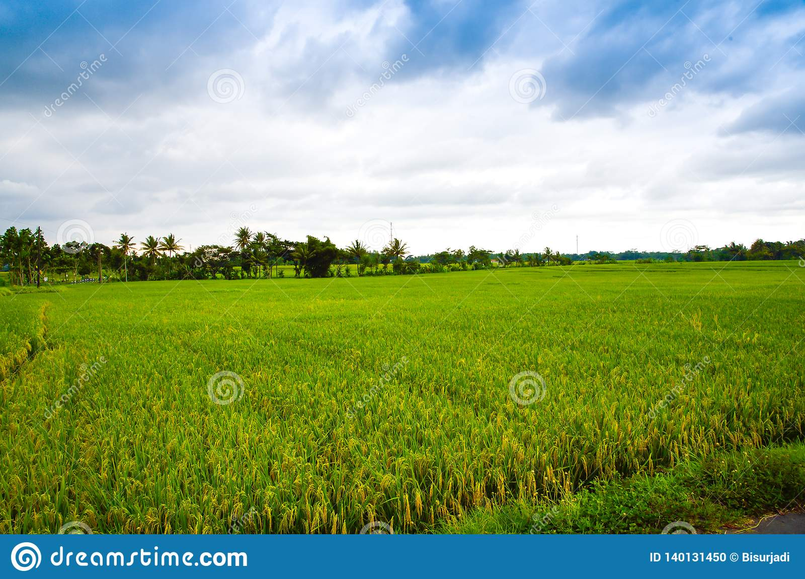 Lush green rice terrace field with mountain and cloudy blue sky