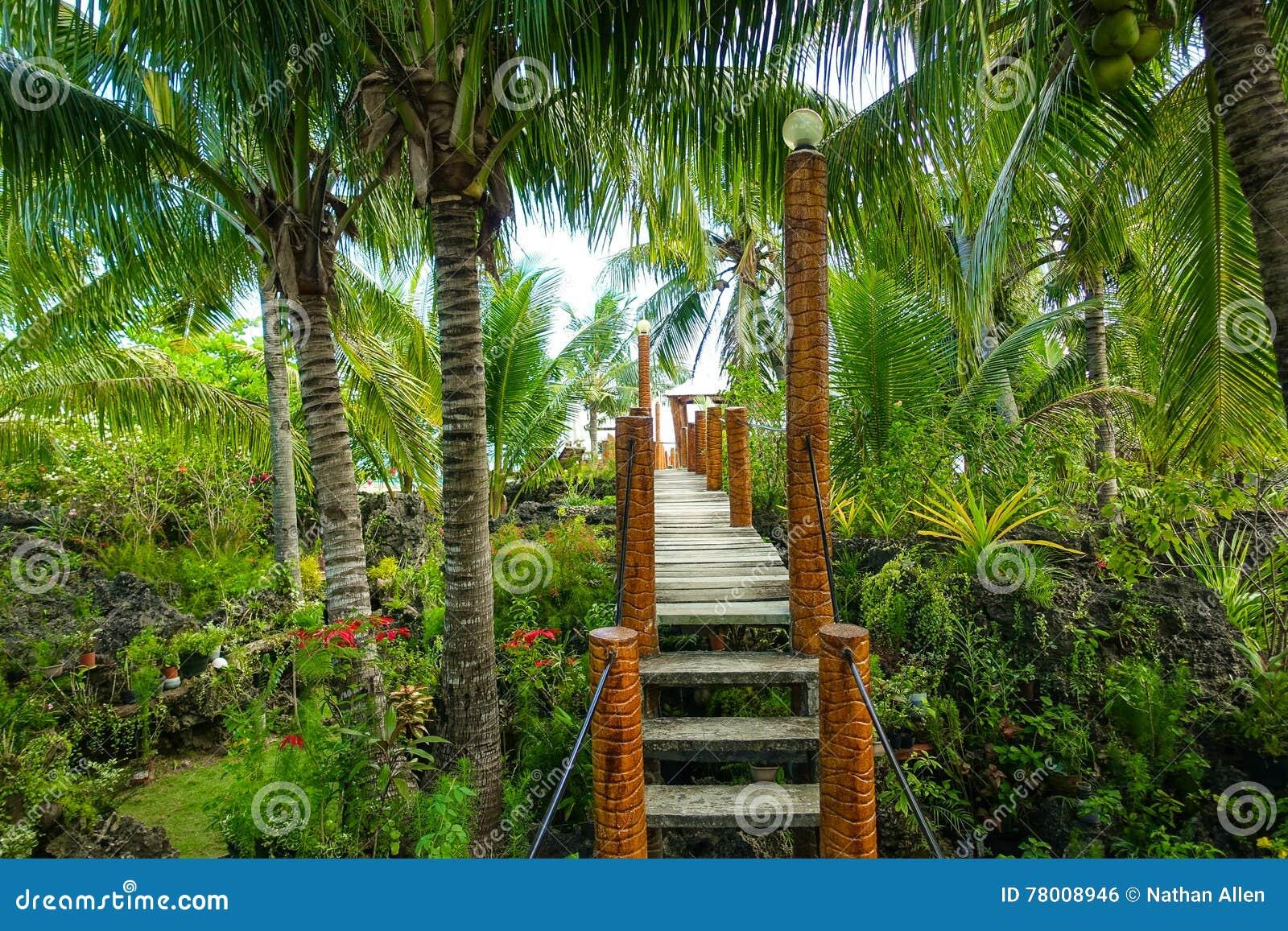 Lush Jungle Walkway stock photo  Image of nobody, forest