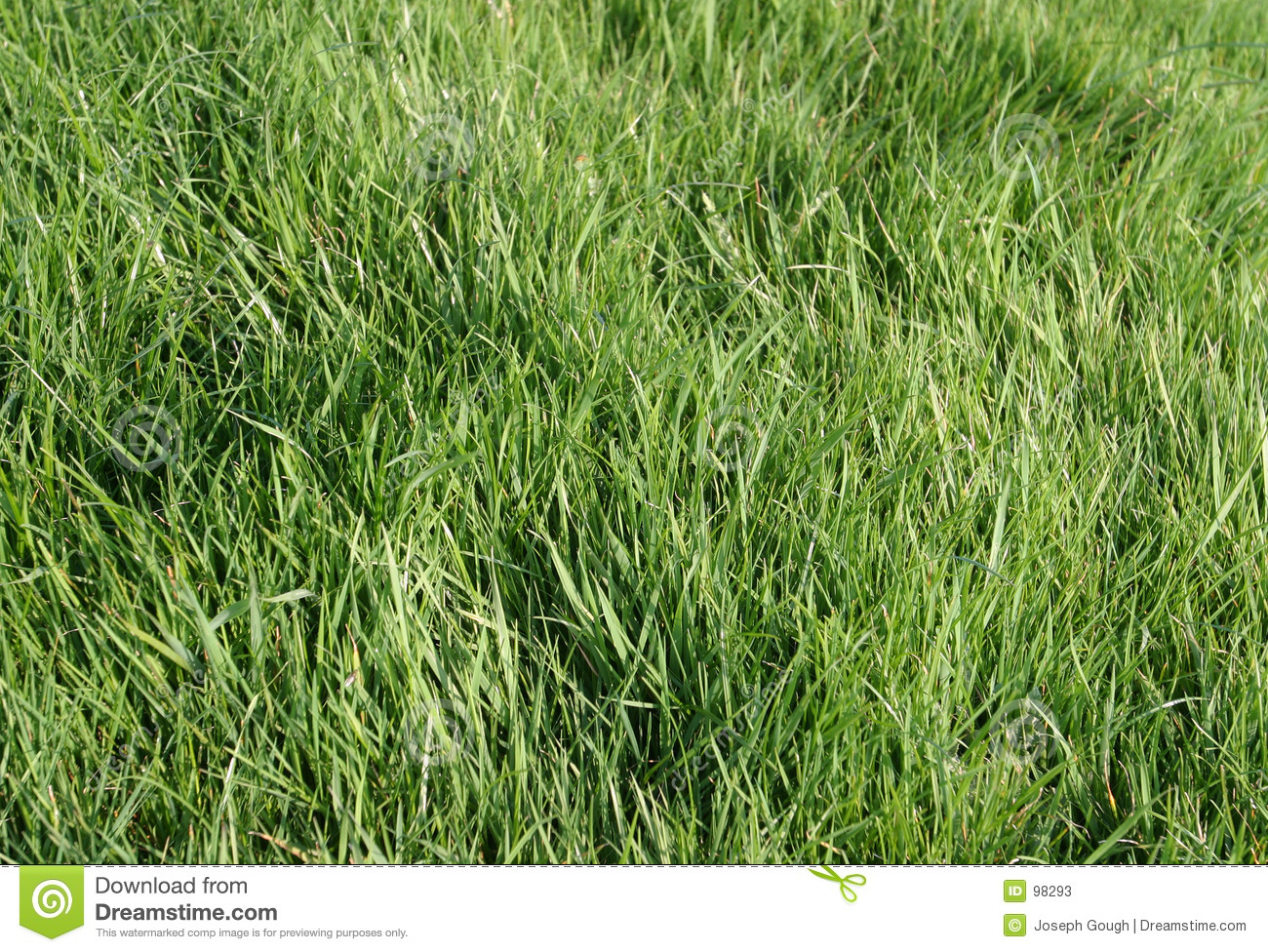 natural wood meadow grass - photo #37