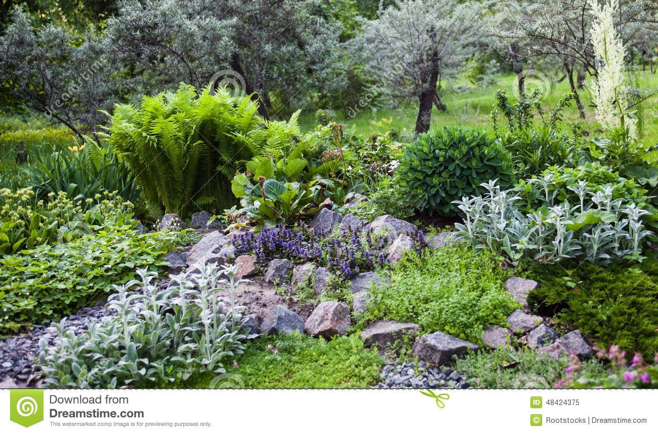 Lush Vegetation In The Green Rock Garden Stock Image