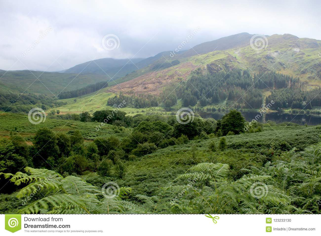 Glen Trool, Galloway Forest Park, Scotland