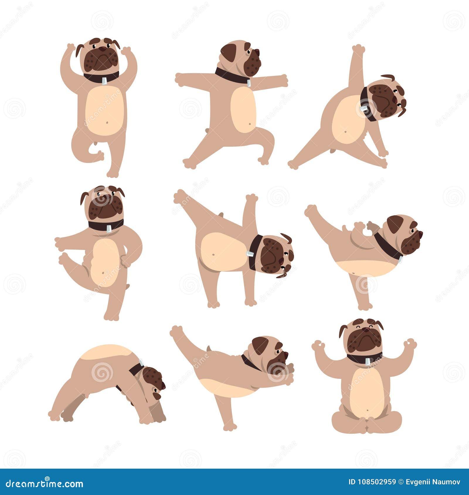 Lustige Bulldogge In Den Verschiedenen Haltungen Von Yoga Gesunder