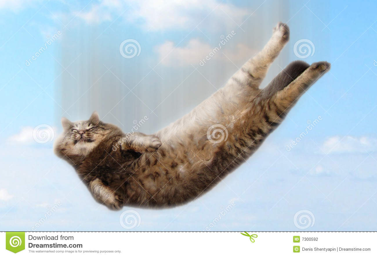 Lustige fallende Katze