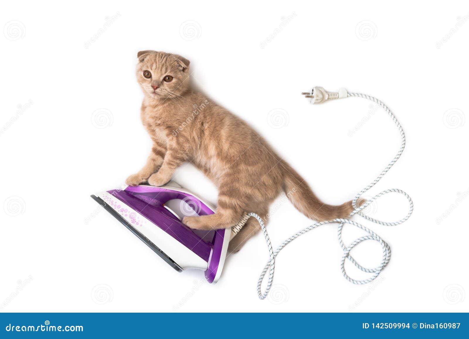 Lustige Katze auf dem elektrischen Eisen, Hausarbeit tuend lokalisiert auf weißem Hintergrund Kreatives Konzept der Feiertagskart