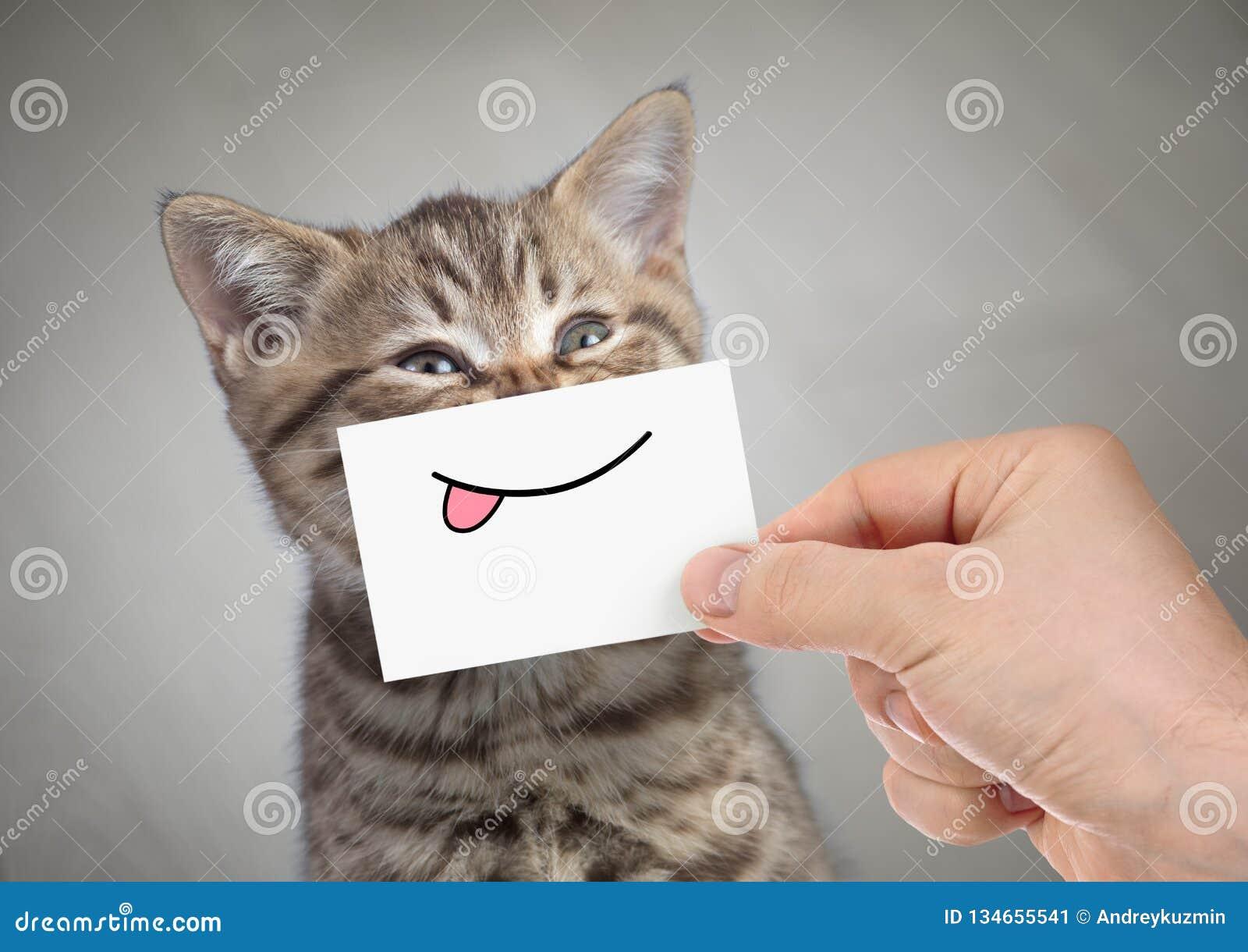 Lustige Katze, die mit der Zunge lächelt