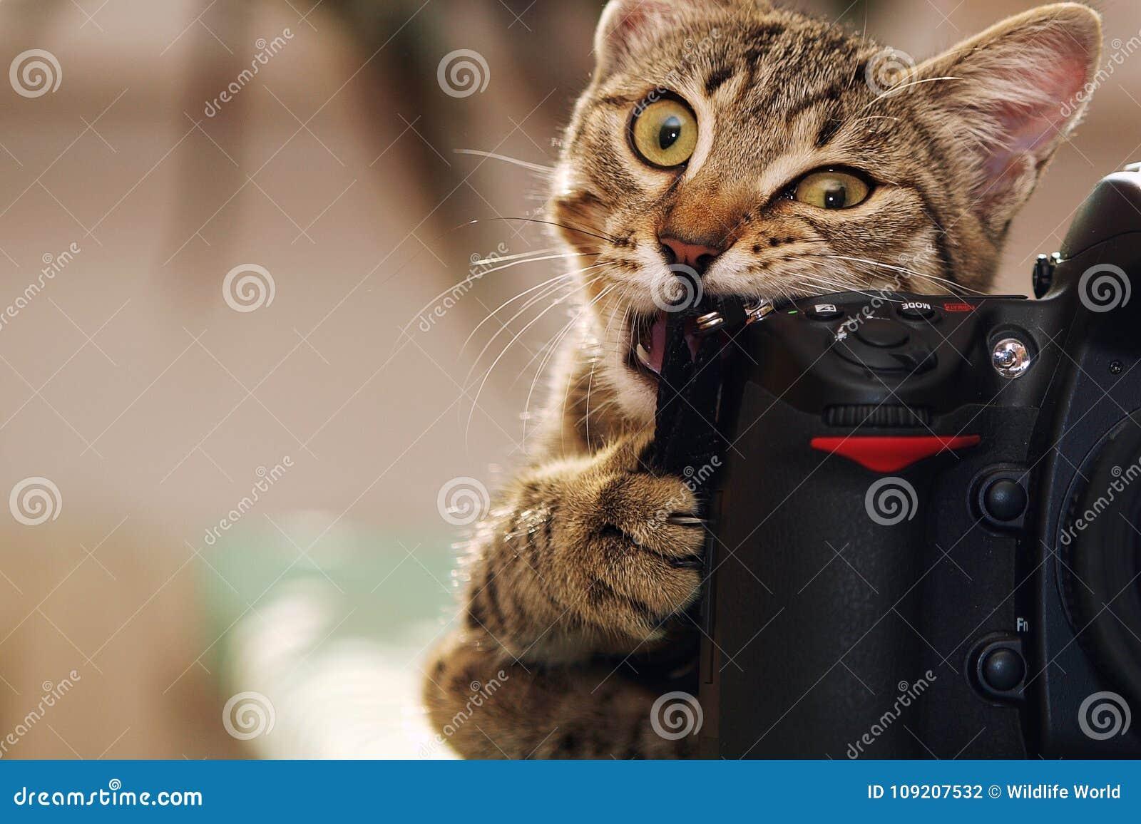 Lustige Katze mit einer Kamera
