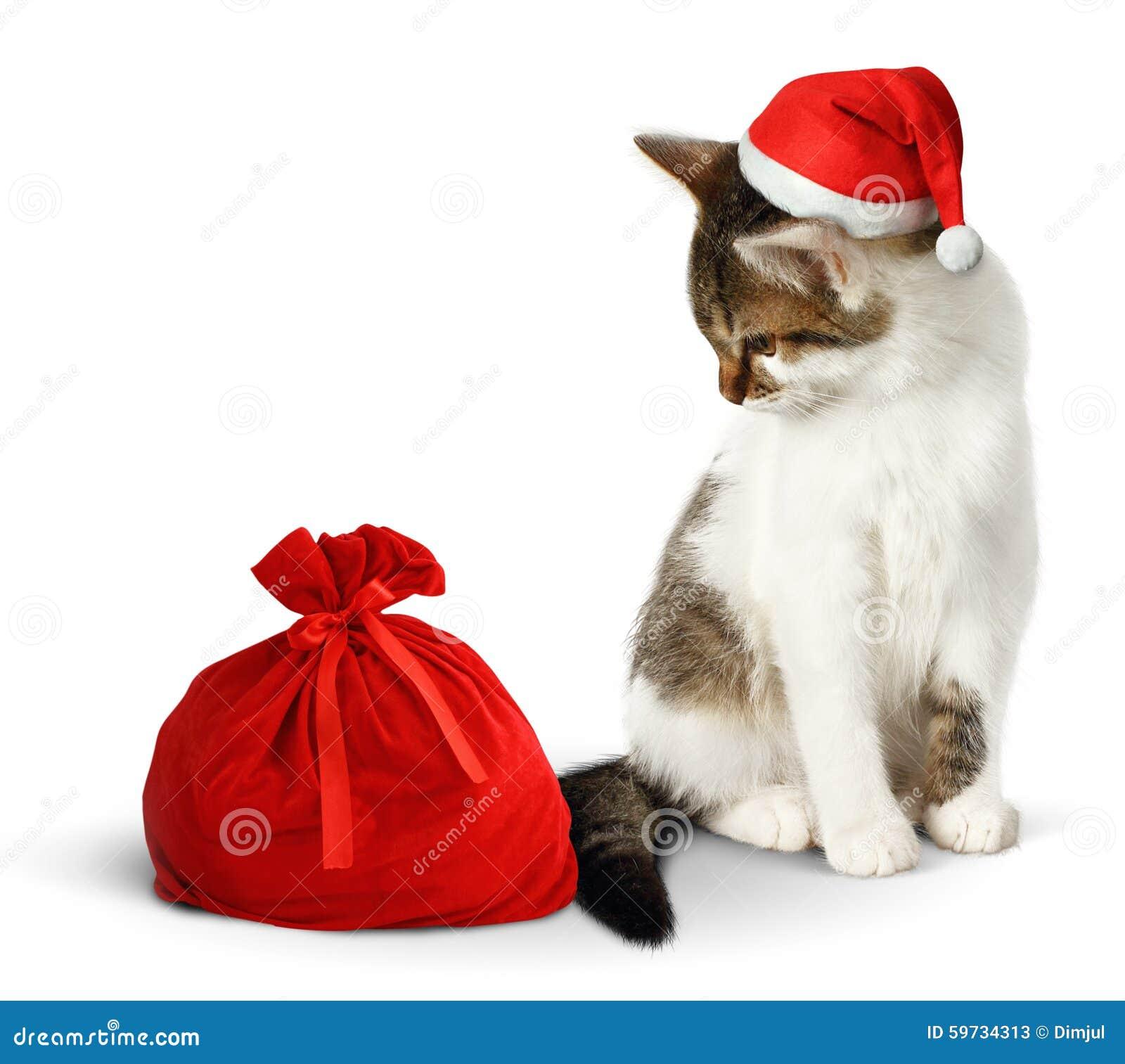 Gemütlich Katze Im Hut Malvorlagen Fotos - Druckbare Malvorlagen ...