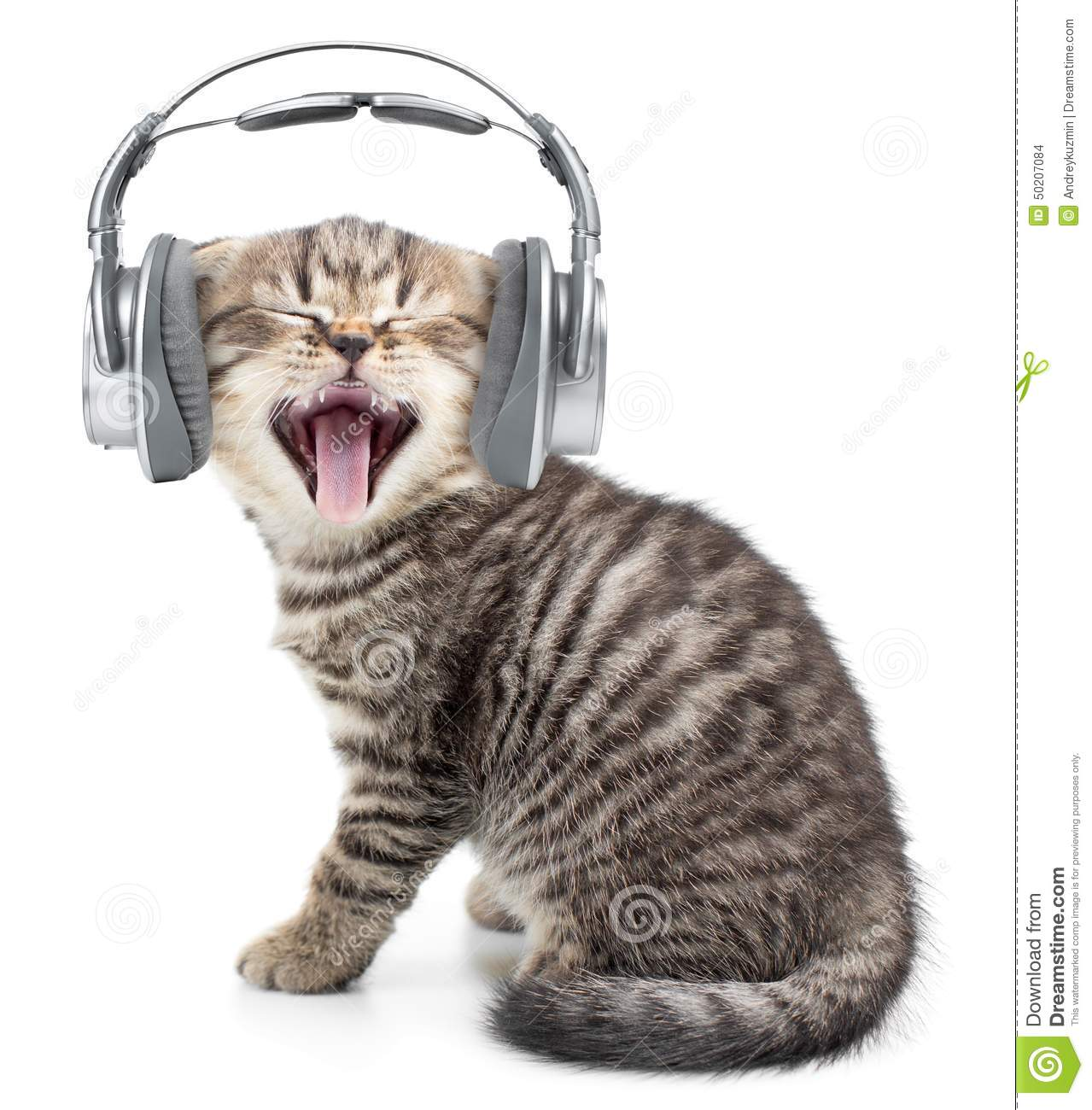 Funny Cat Videos Listening To Music