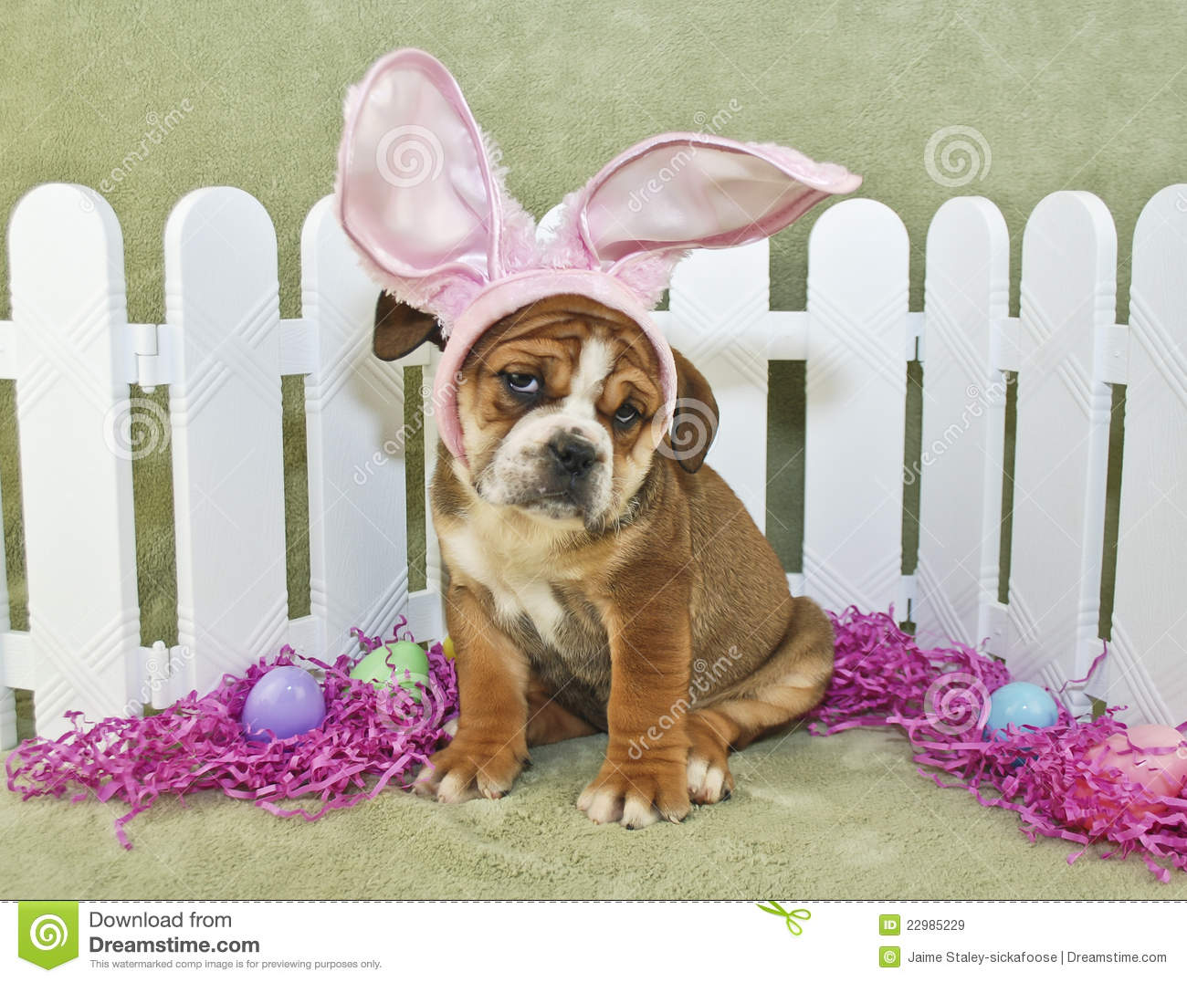 lustige ostern bulldogge stockbild bild von hunde. Black Bedroom Furniture Sets. Home Design Ideas