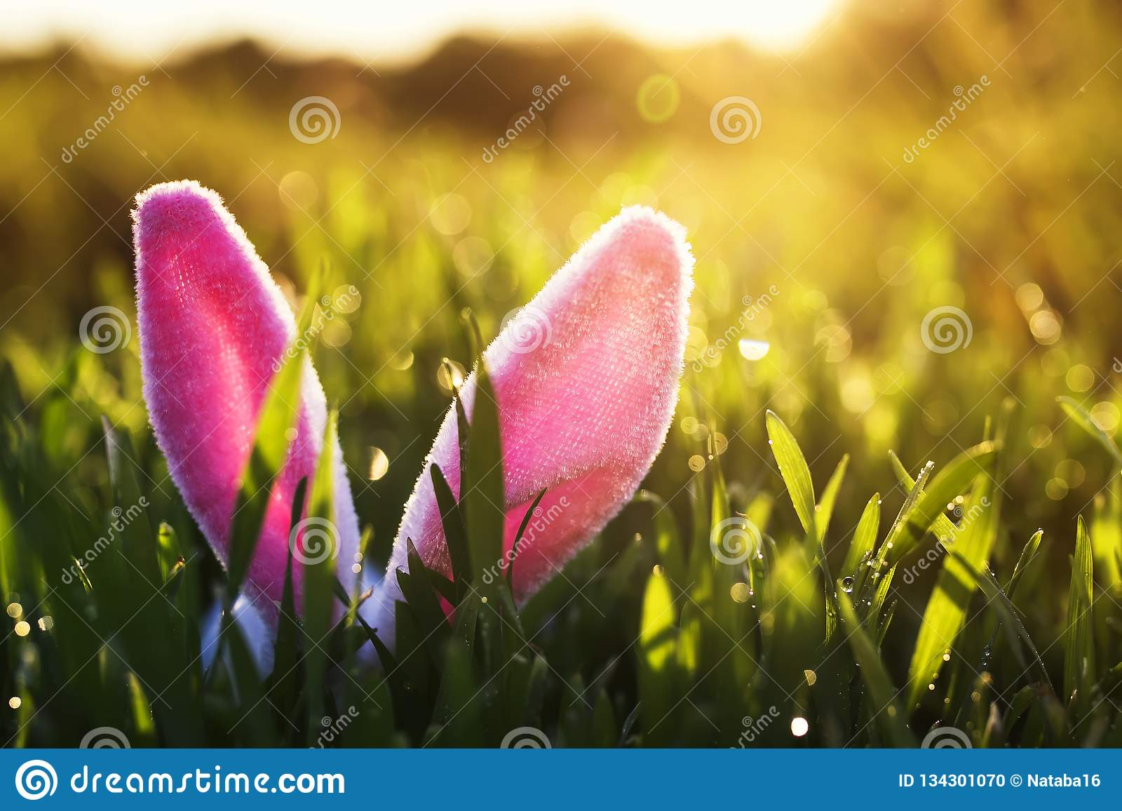 Lustige Ostern-Szene mit einem Paar rosa Häschenohren, die aus dem üppigen grünen Gras heraus durchnäßt in der sonnigen warmen Fr