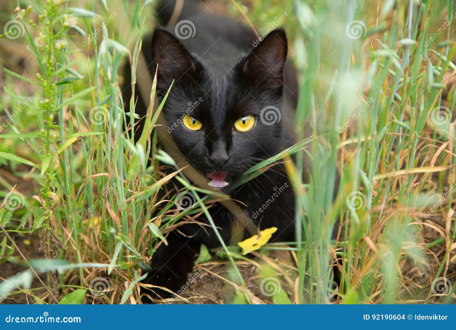 lustige schwarze katze mit gelben augen drau en im gras stockfoto bild 92190604. Black Bedroom Furniture Sets. Home Design Ideas