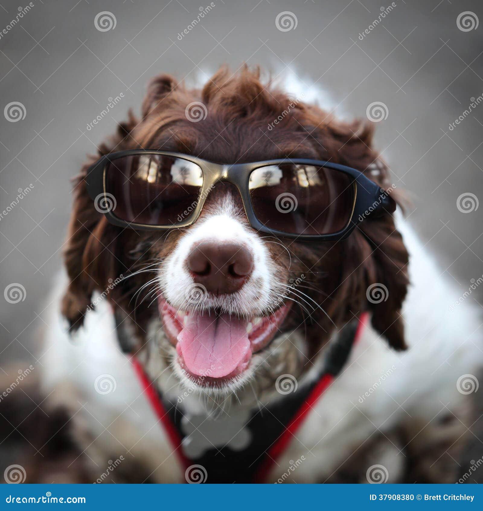 Lustiger Hippie-Hundetragende Sonnenbrille