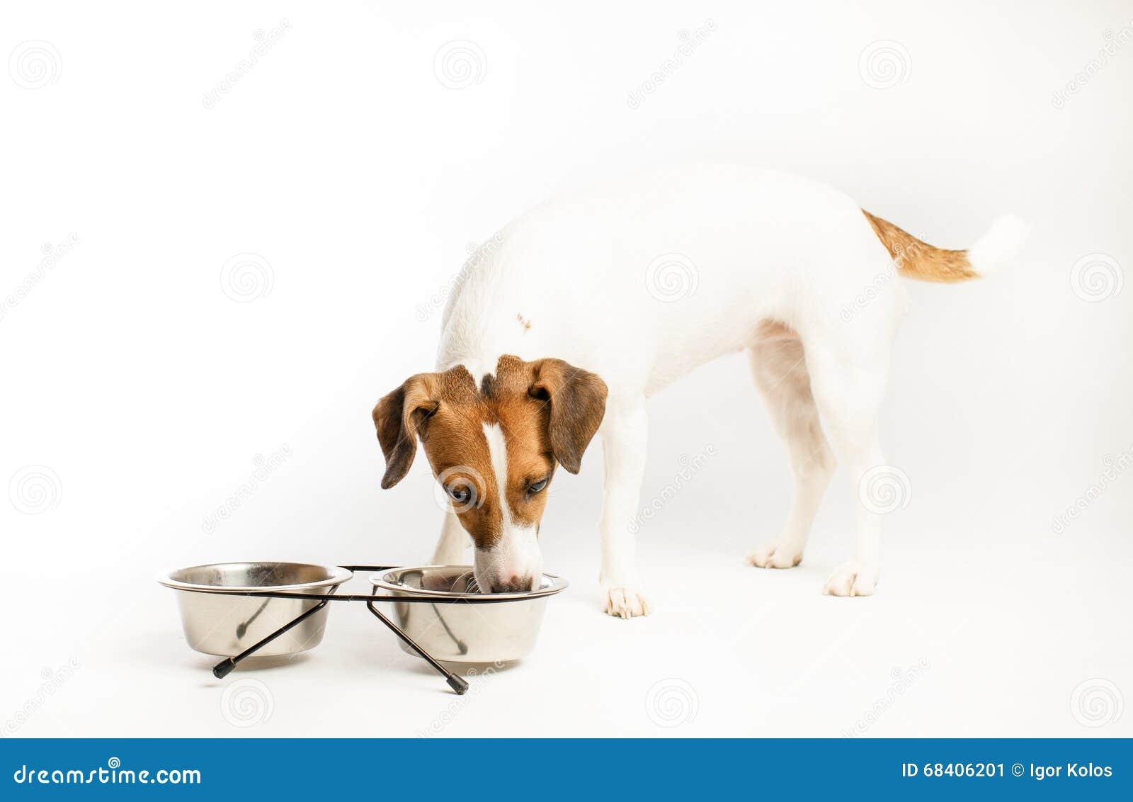 lustiger hund der lebensmittel isst stockfoto bild 68406201. Black Bedroom Furniture Sets. Home Design Ideas