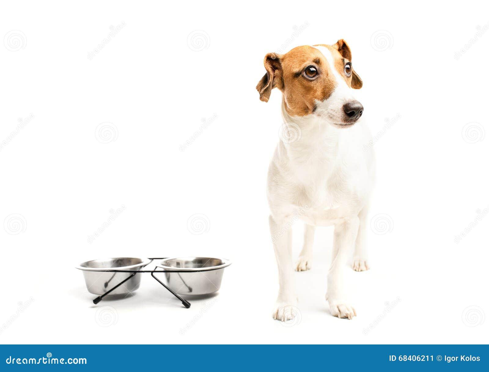 lustiger hund der lebensmittel isst stockfoto bild 68406211. Black Bedroom Furniture Sets. Home Design Ideas