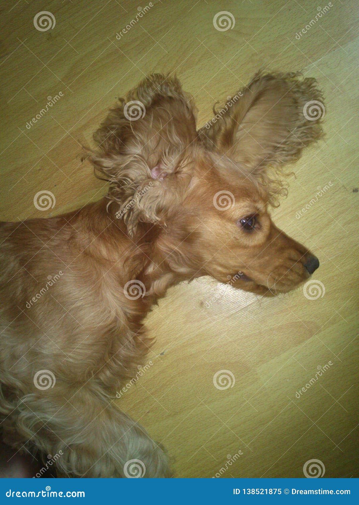 Lustiger Hund in der Welt