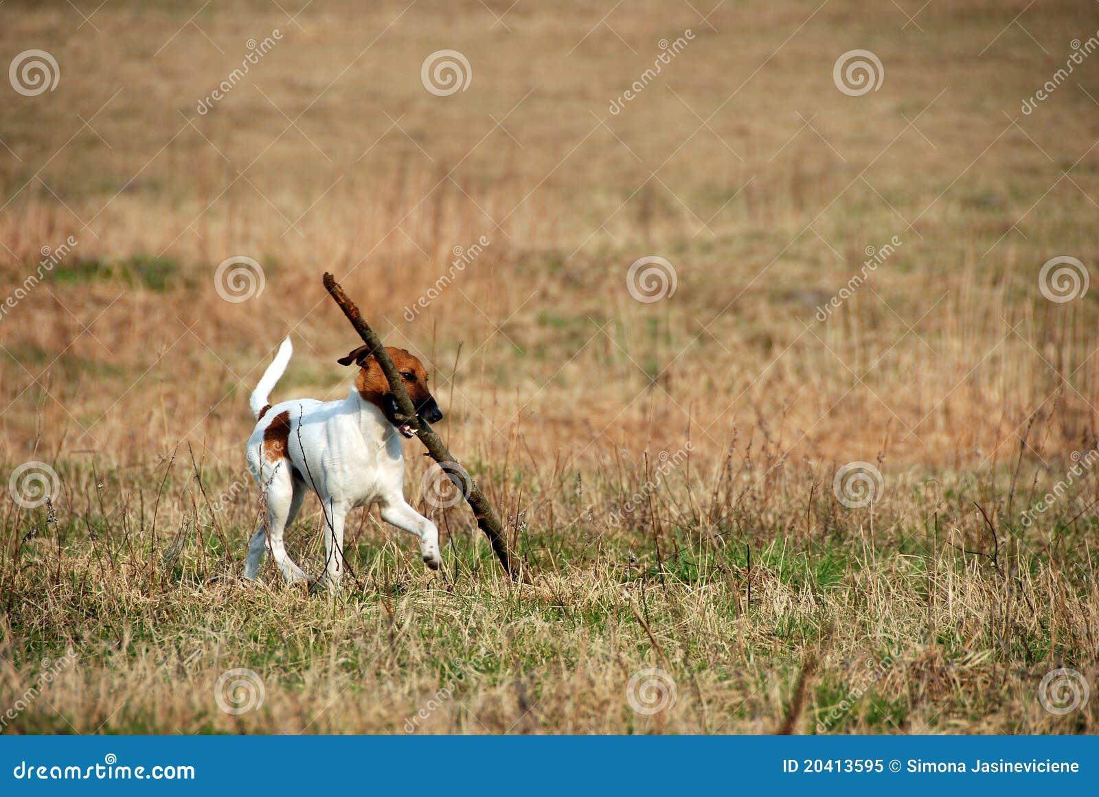 Lustiger Hund mit Steuerknüppel