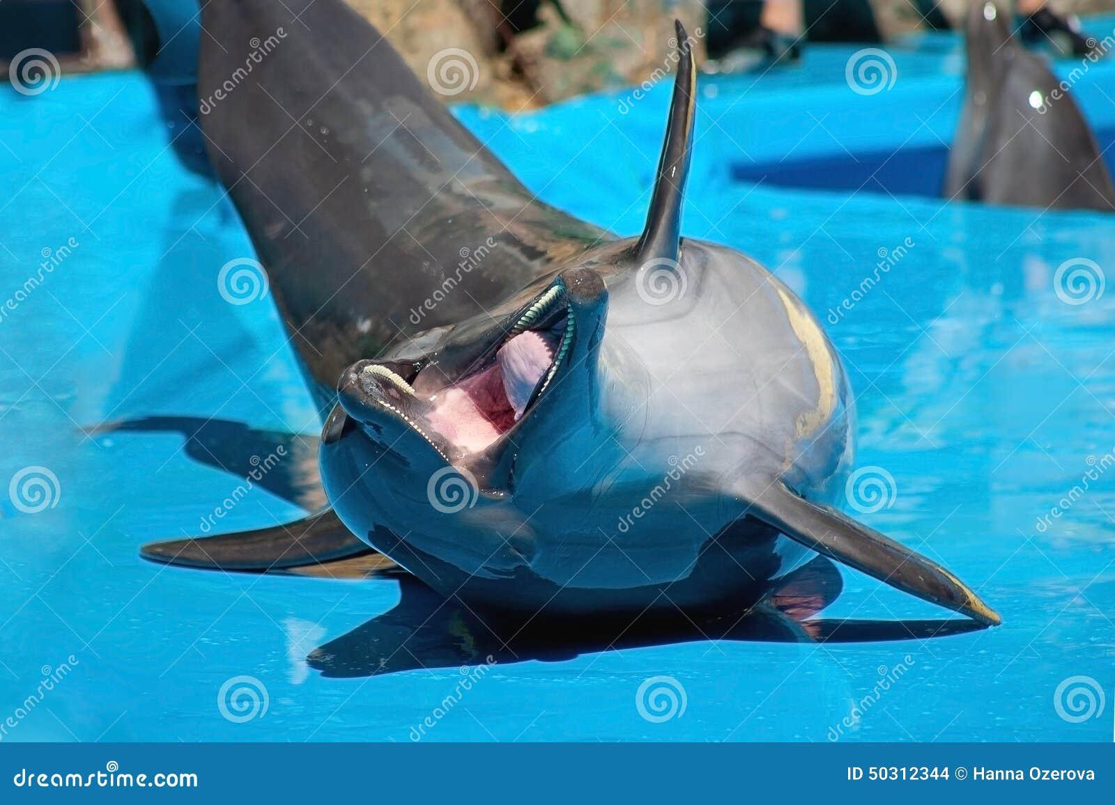 Lustiger lachender Delphin