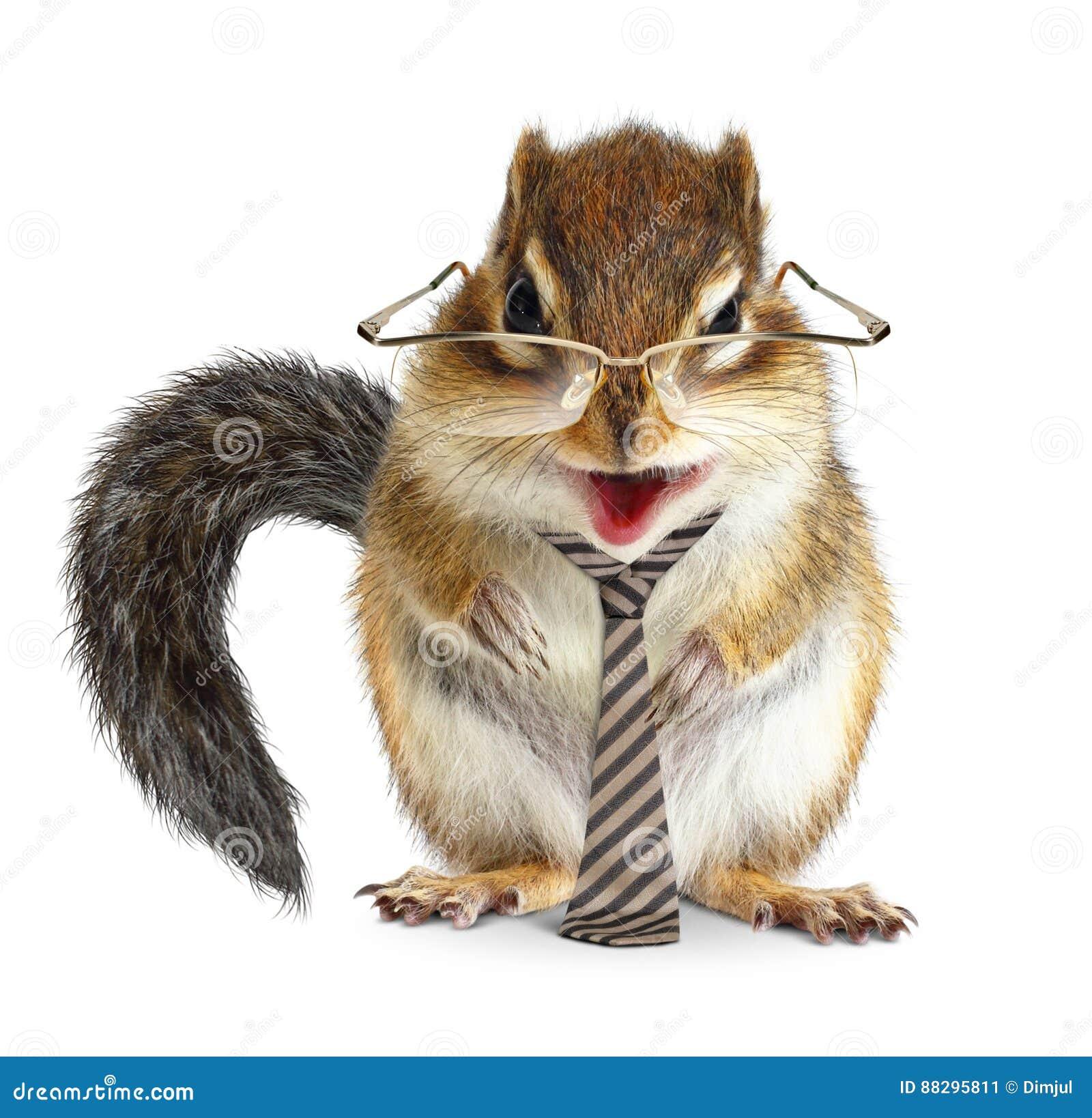 Lustiger Tiergeschäftsmann, Streifenhörnchen mit Bindung und Gläser