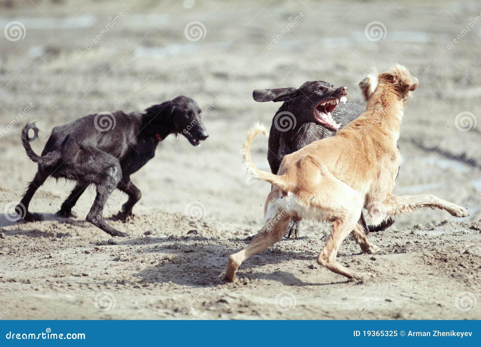 Luta de cão
