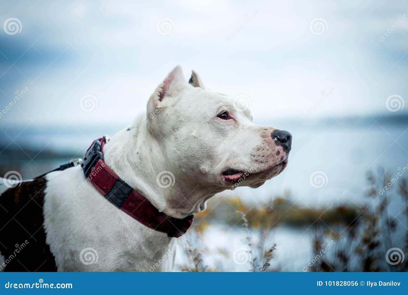 Luta do cão