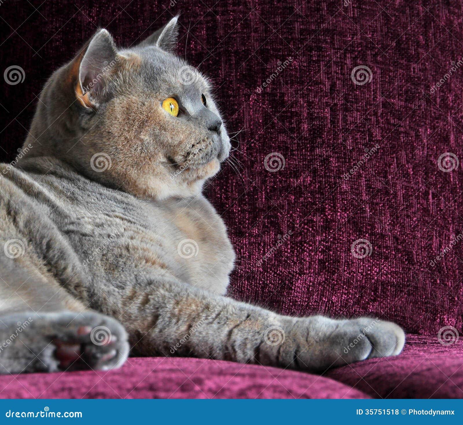 Luxury side profile cat on sofa