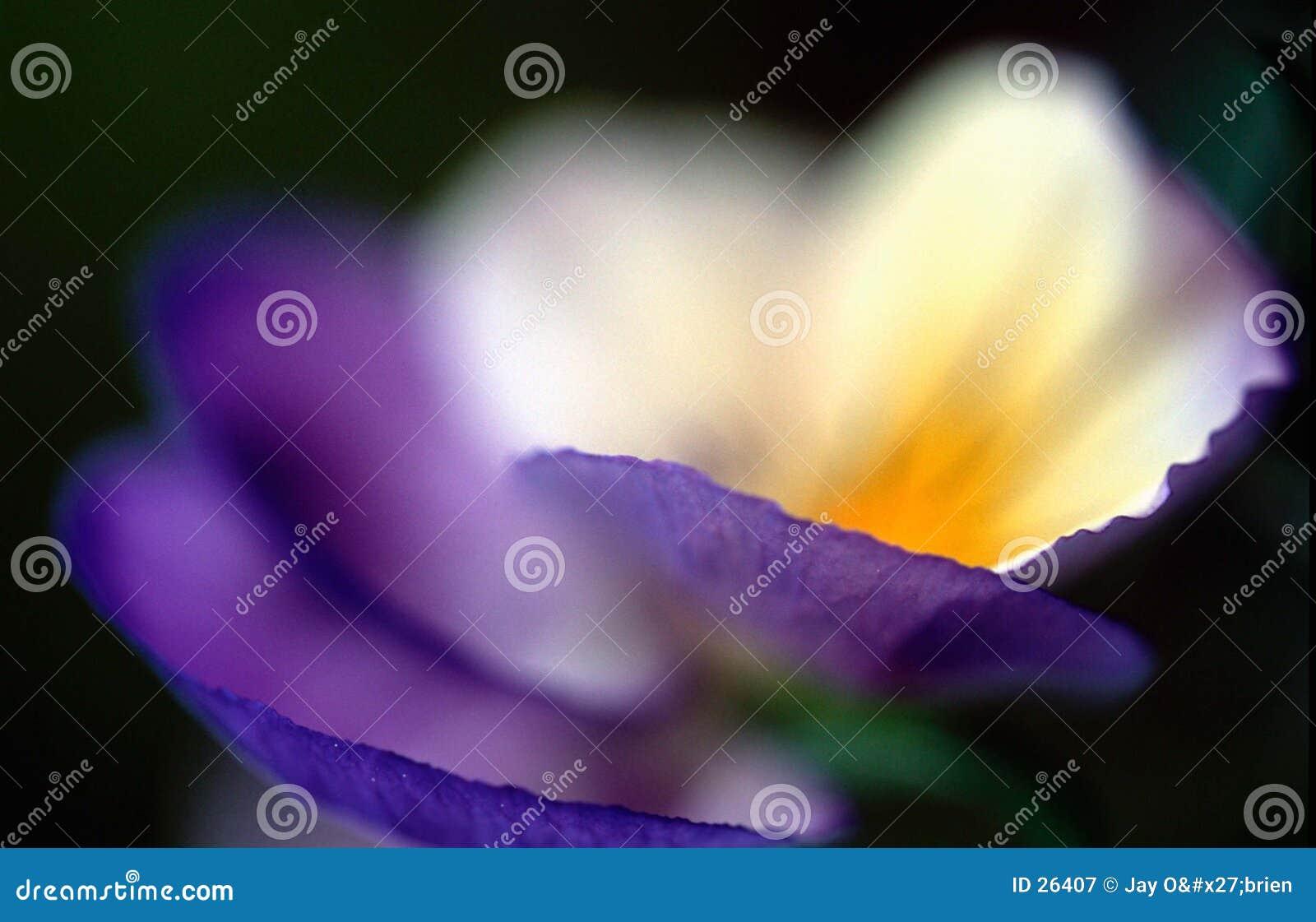 Download Luz blanca imagen de archivo. Imagen de azul, amarillo, pensamiento - 26407