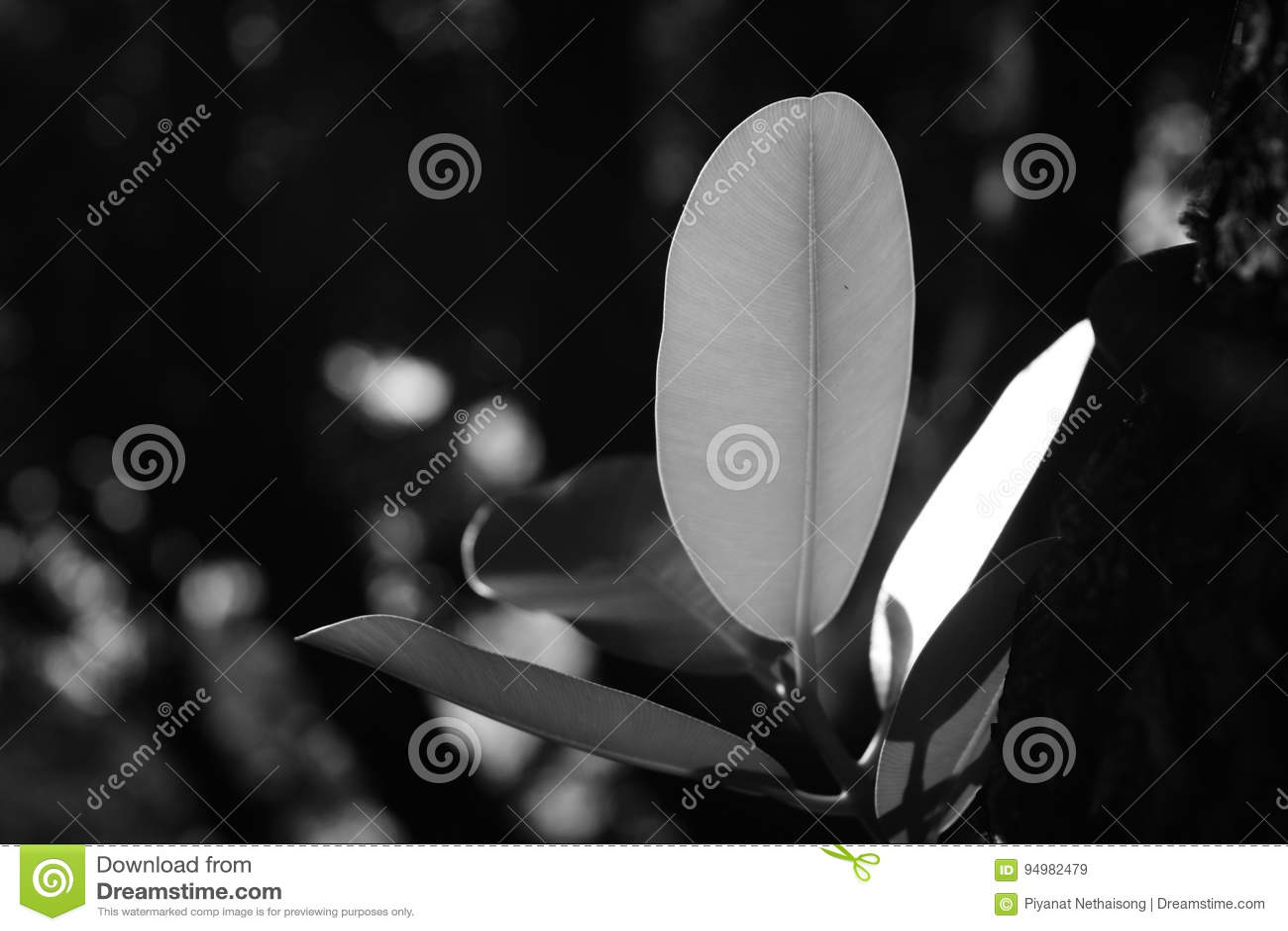 Luz da folha a brilhar