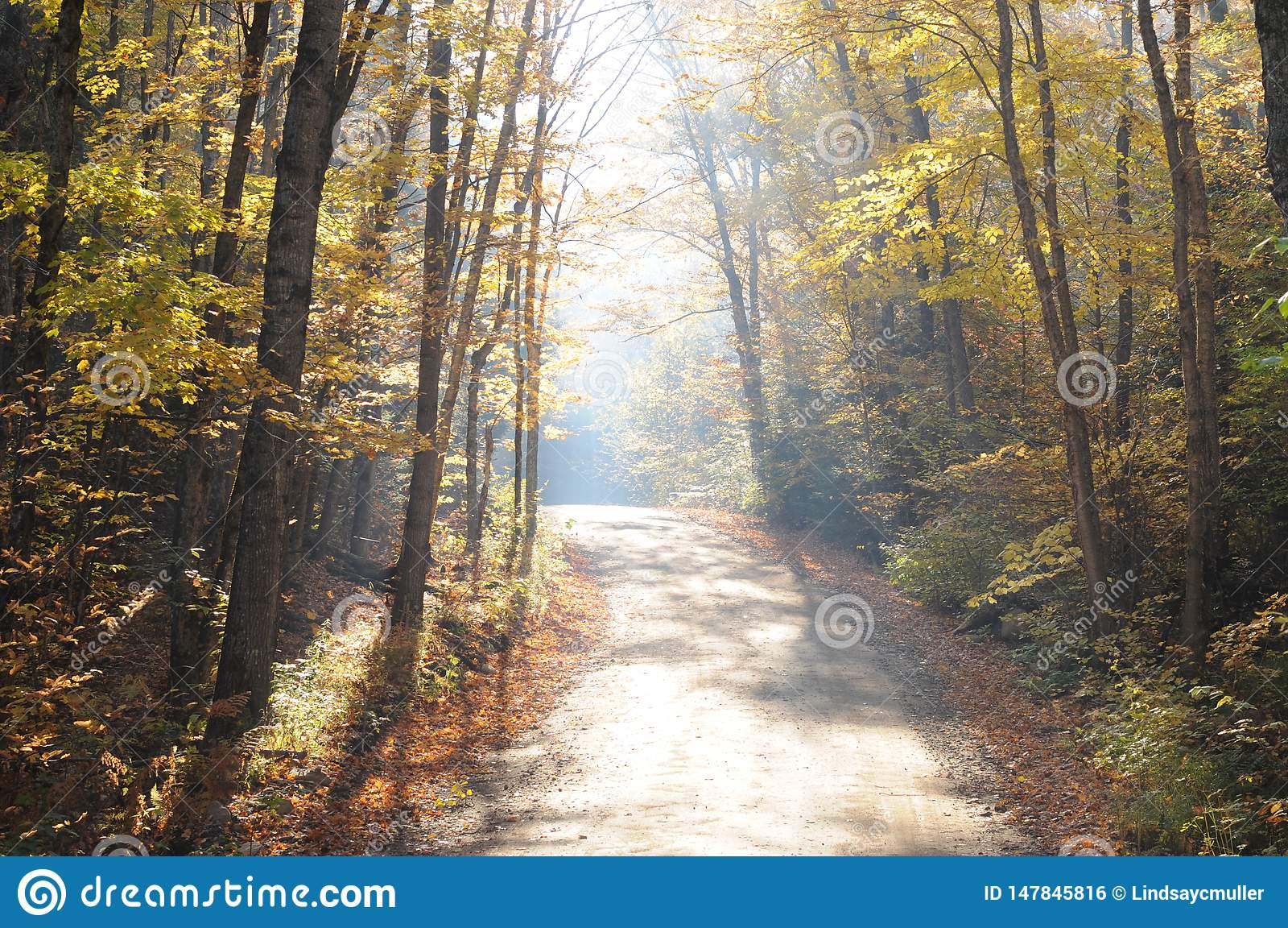 Luz de la madrugada en la trayectoria en otoño