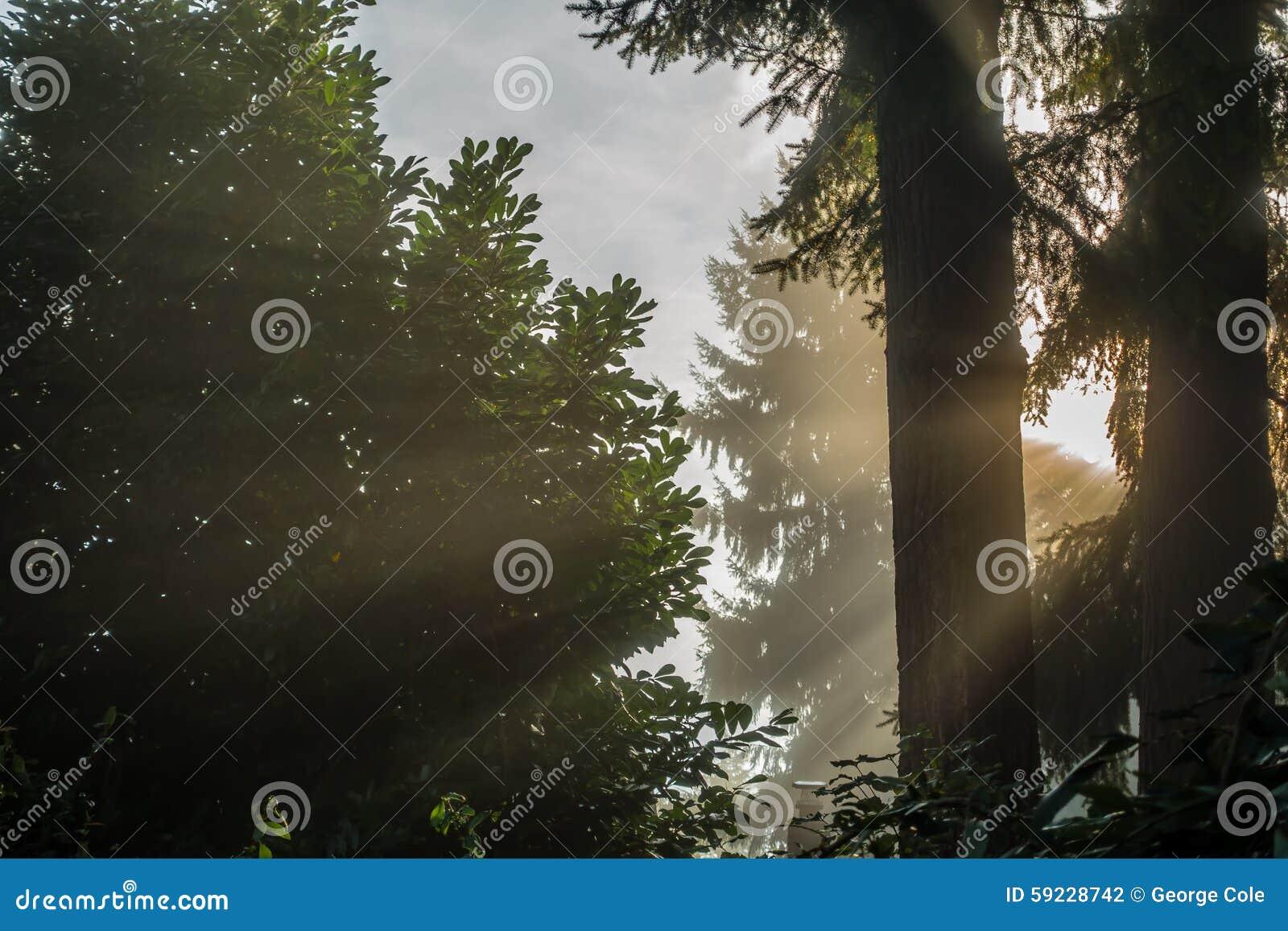 Download Luz 2 De Los árboles De La Niebla Foto de archivo - Imagen de brillo, bosque: 59228742