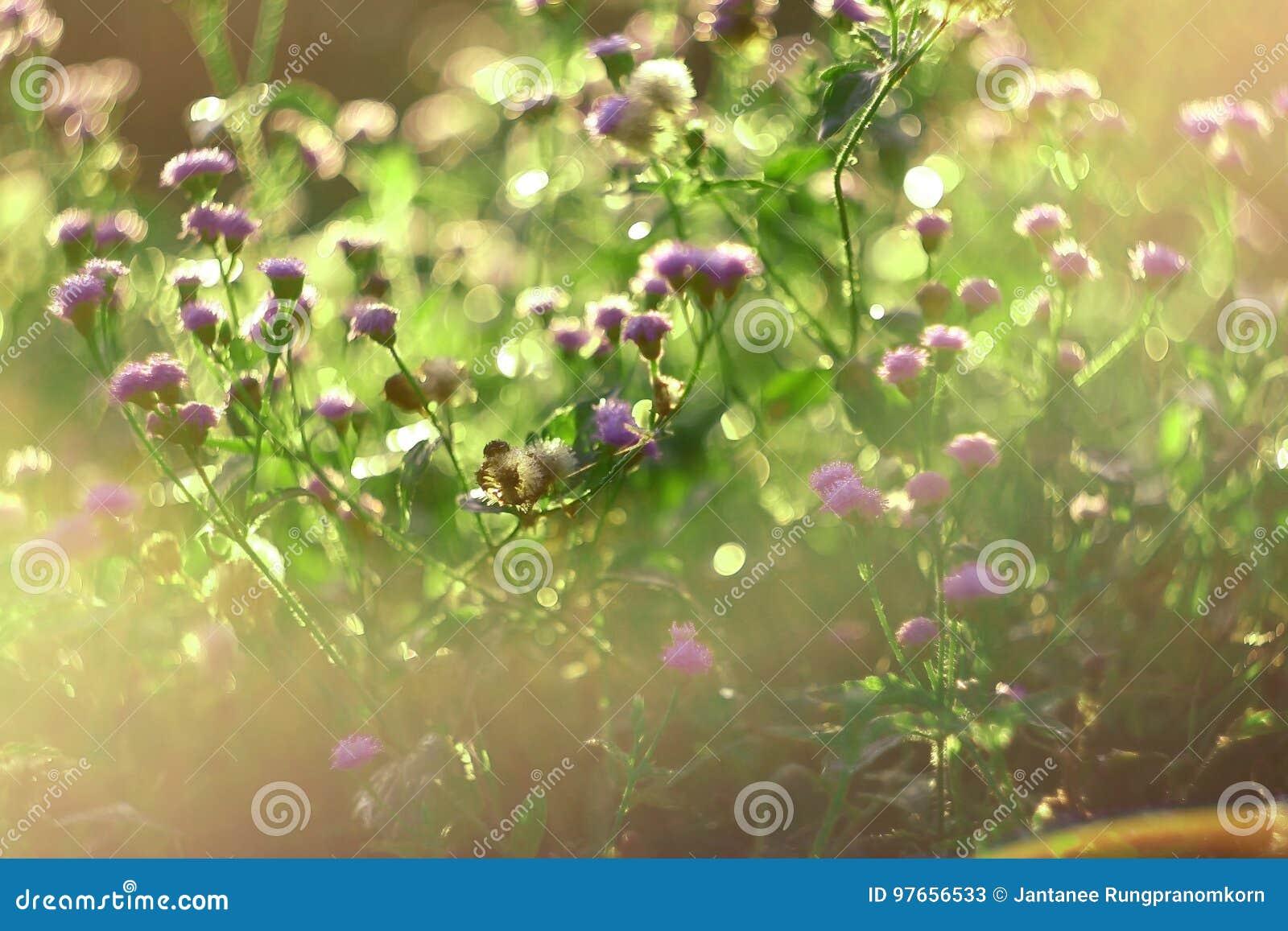 Luz de oro por la mañana con un prado de la primavera Fondo de la naturaleza Hierba y luz del sol