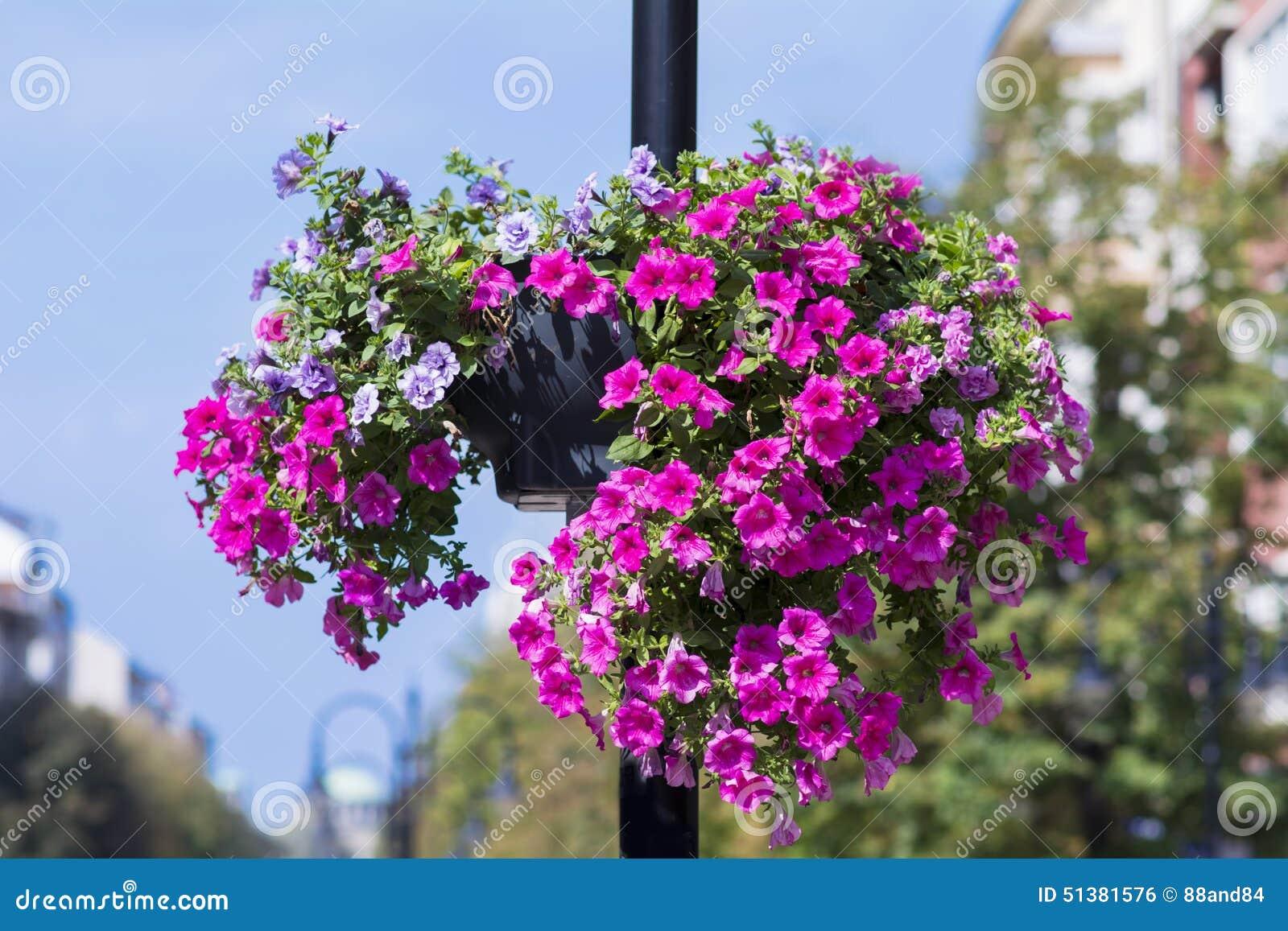 Luz de rua com as cestas de suspensão coloridas da flor do petúnia