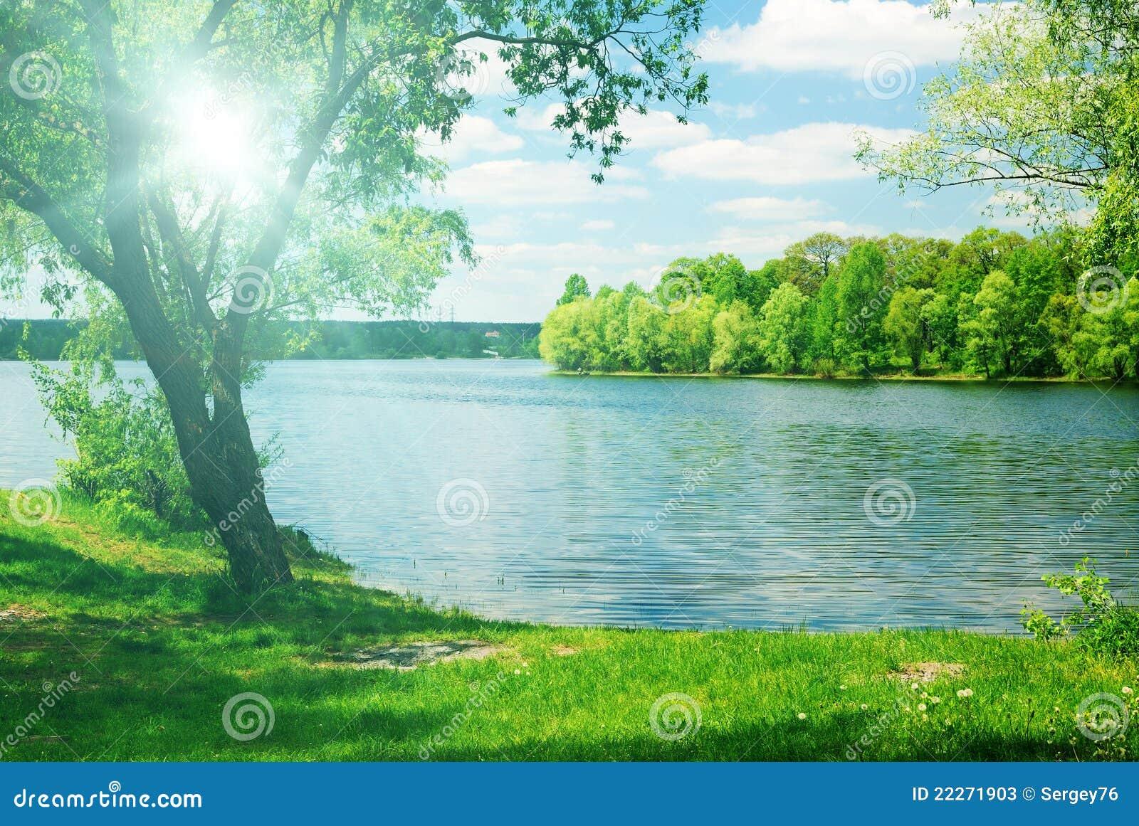 Luz del sol brillante y árbol verde