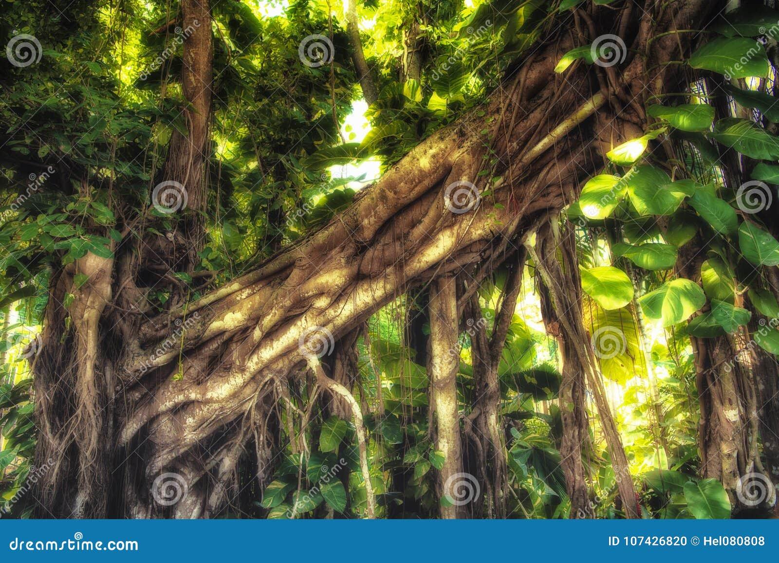 Luz del sol en bosque de la selva