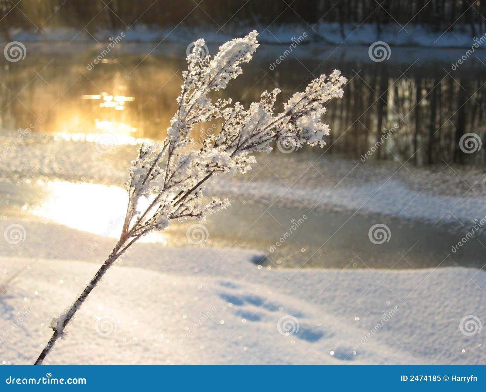 Luz del sol en invierno