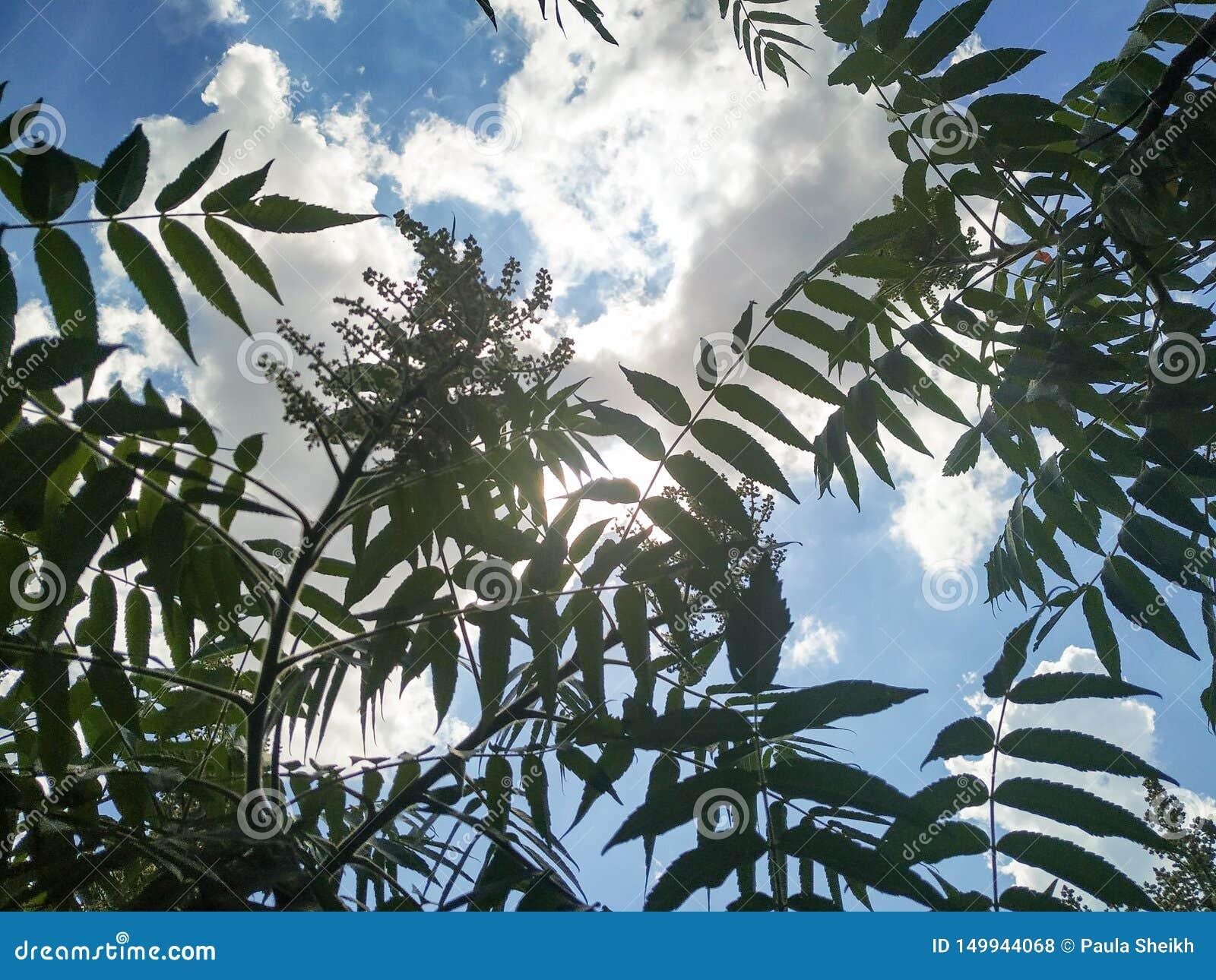 Luz do sol através das nuvens e das plantas