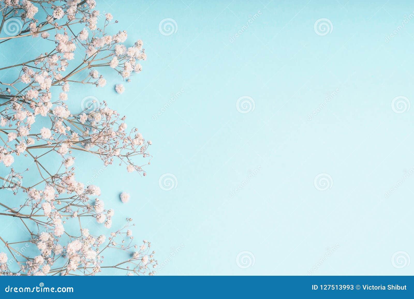 Luz - fundo floral azul com as flores brancas do Gypsophila e espaço da cópia para seu projeto