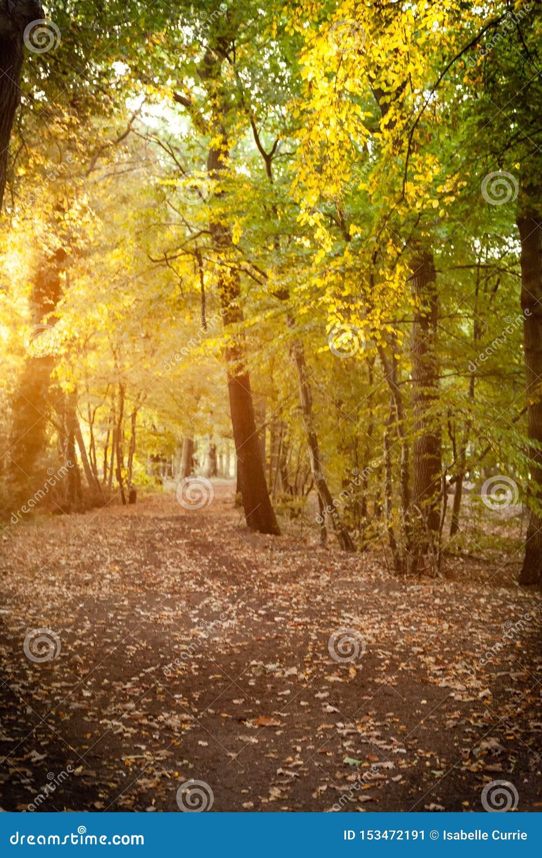 Luz mágica de la mañana en el bosque