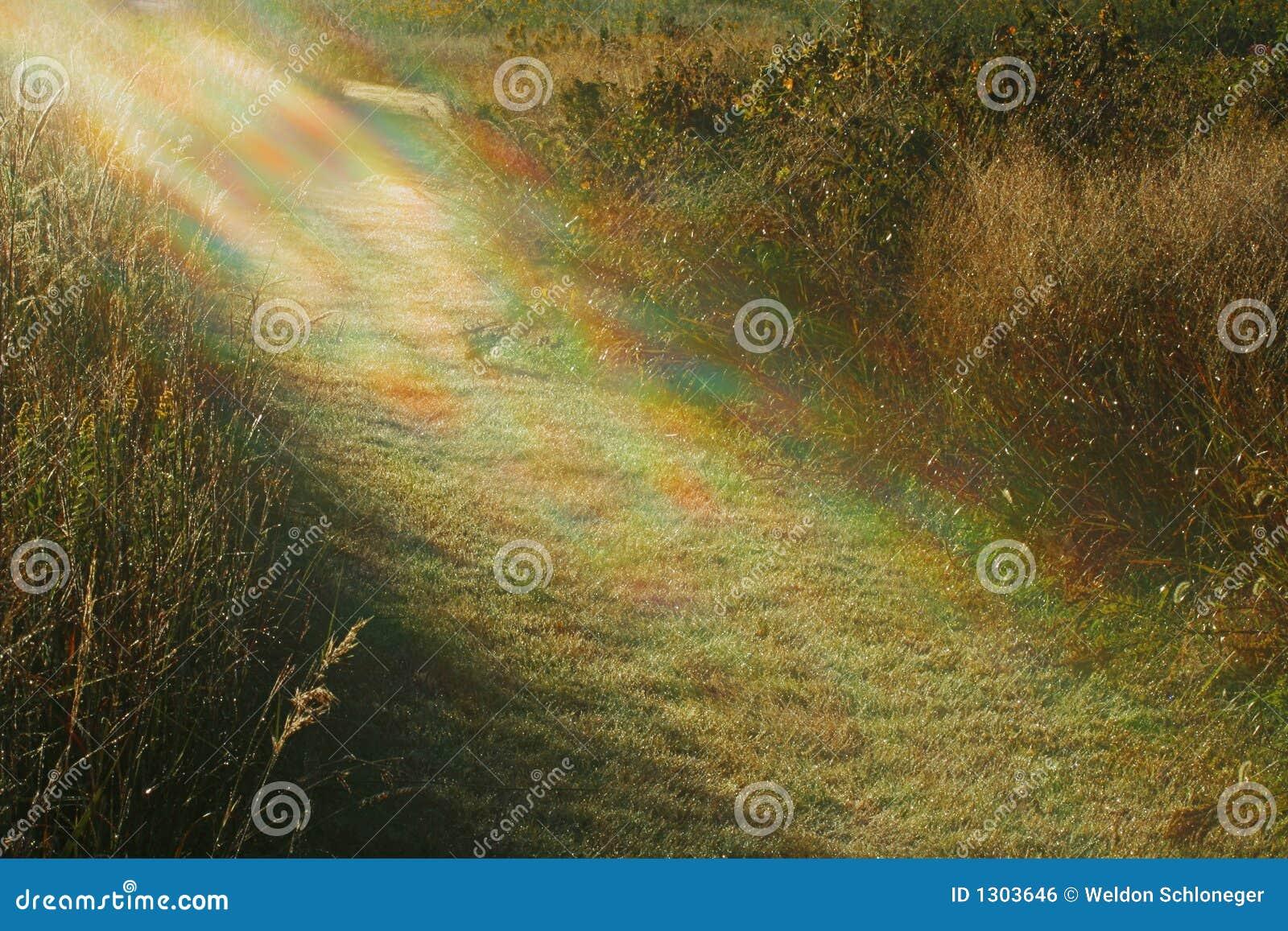 Luz a mi camino