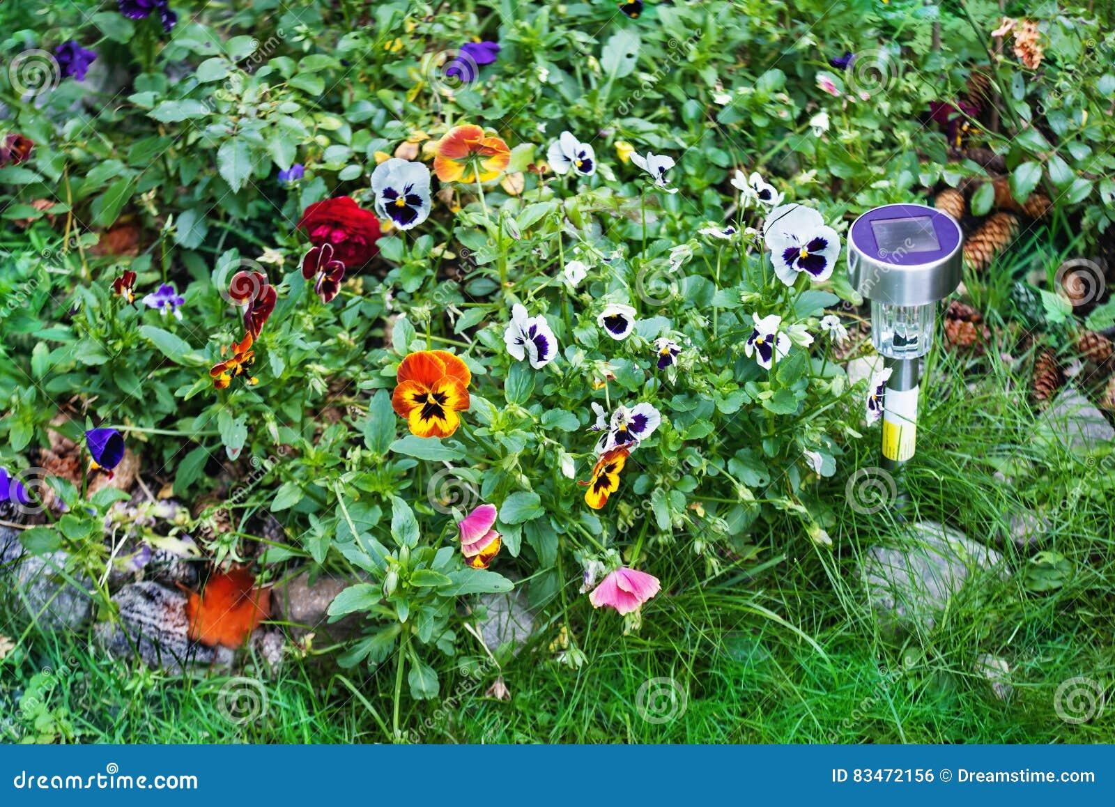 Luz solar pequena do jardim com flores do amor perfeito