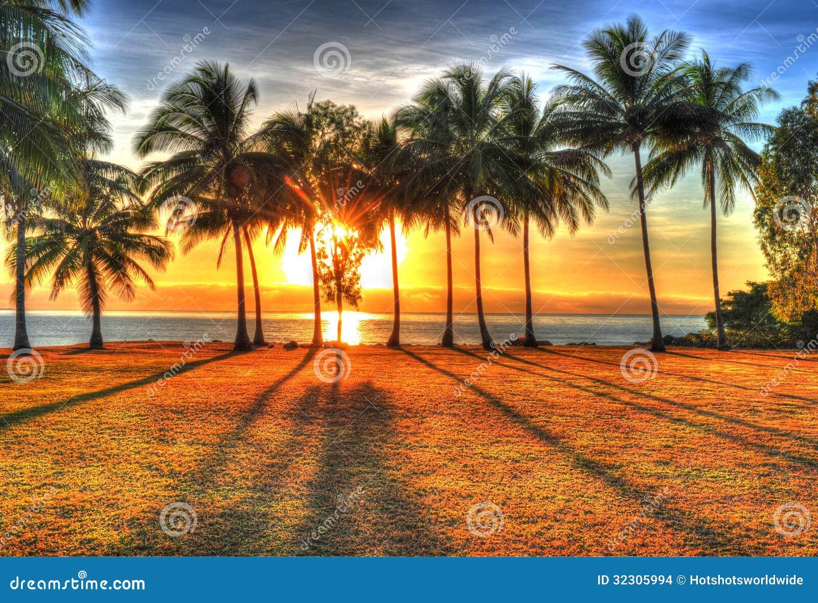 Luz solar que aumenta atrás das palmeiras em HDR, Port Douglas, Austrália