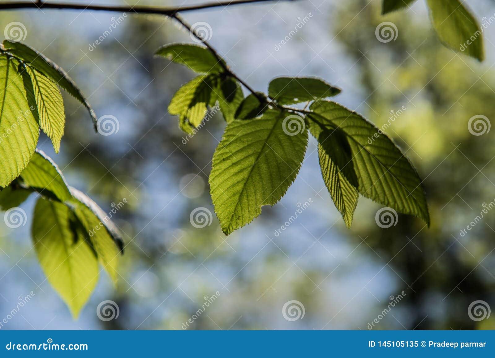 Luz solar que esconde atrás da folha