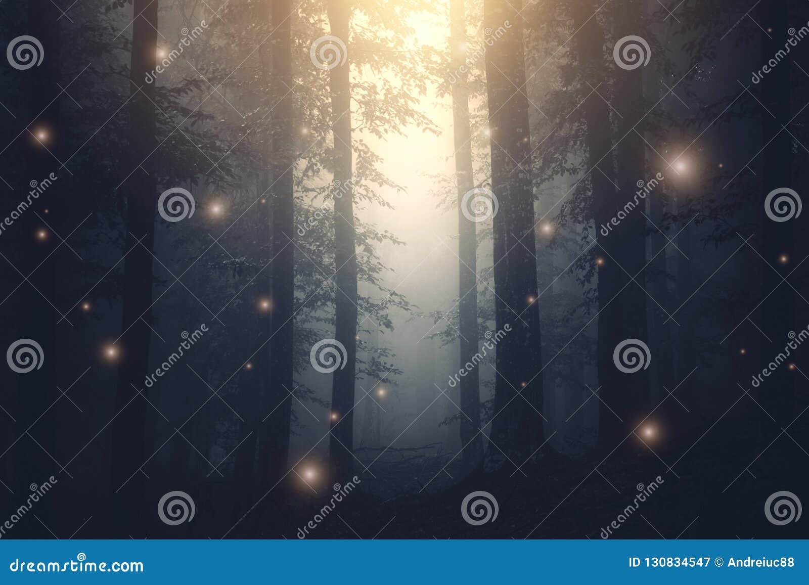Luzes feericamente da fantasia mágica na floresta encantado com névoa
