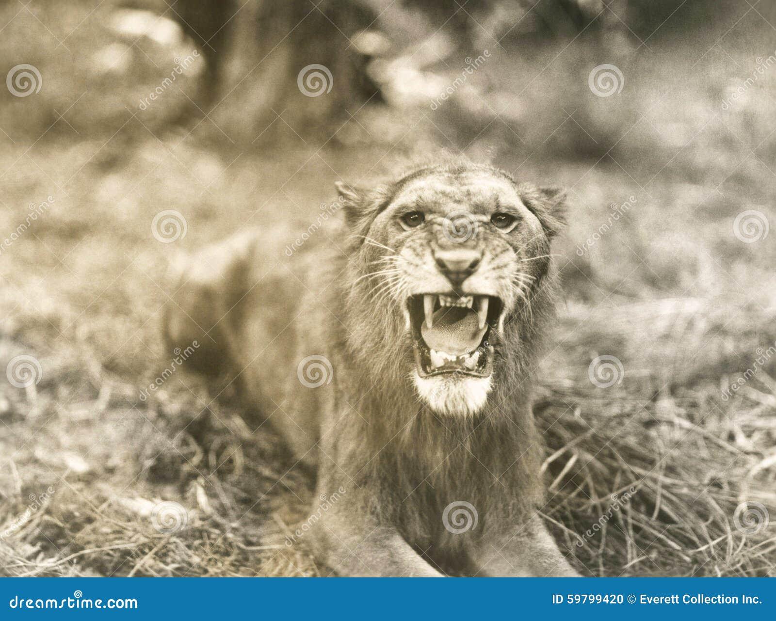 Lwa poryk