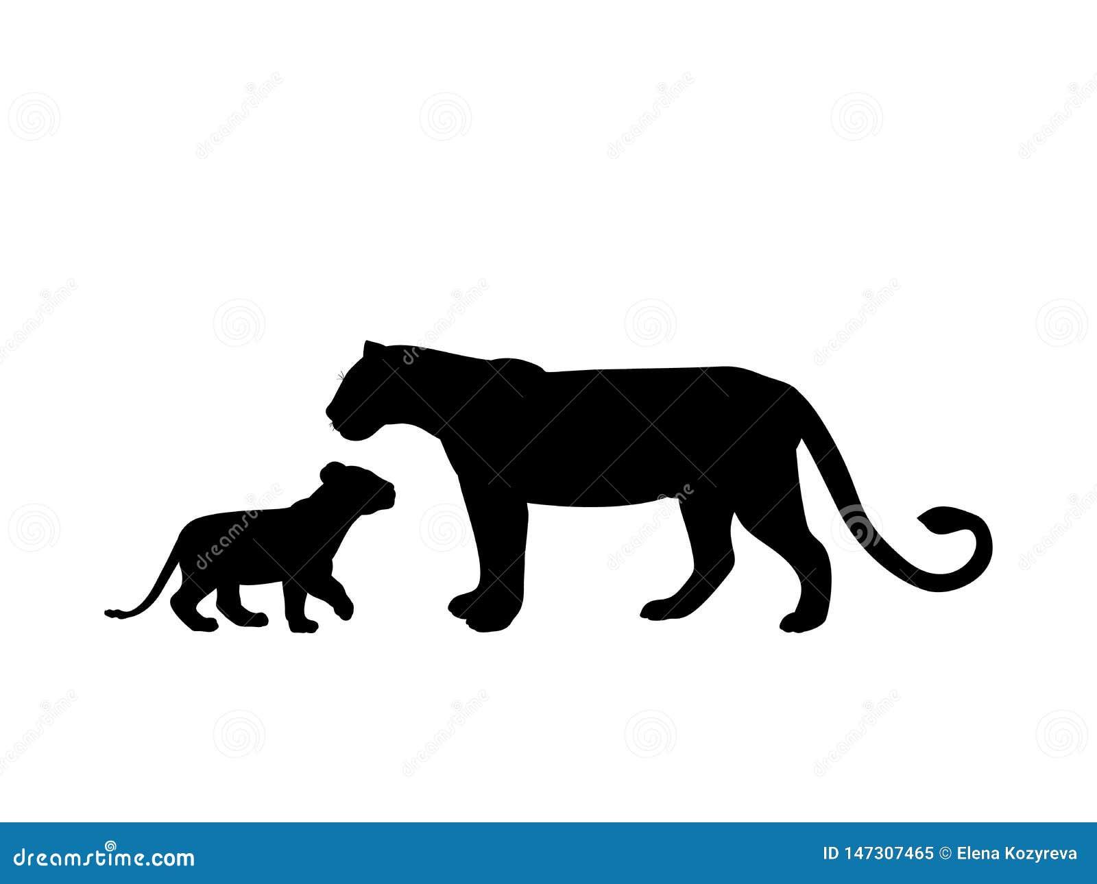 Lwicy i lwa lisiątka drapieżnik czerni sylwetki zwierzęcia