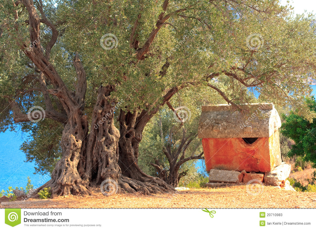 Lycian Sarcophagus And Ancient Olive Tree Stock Photos ...
