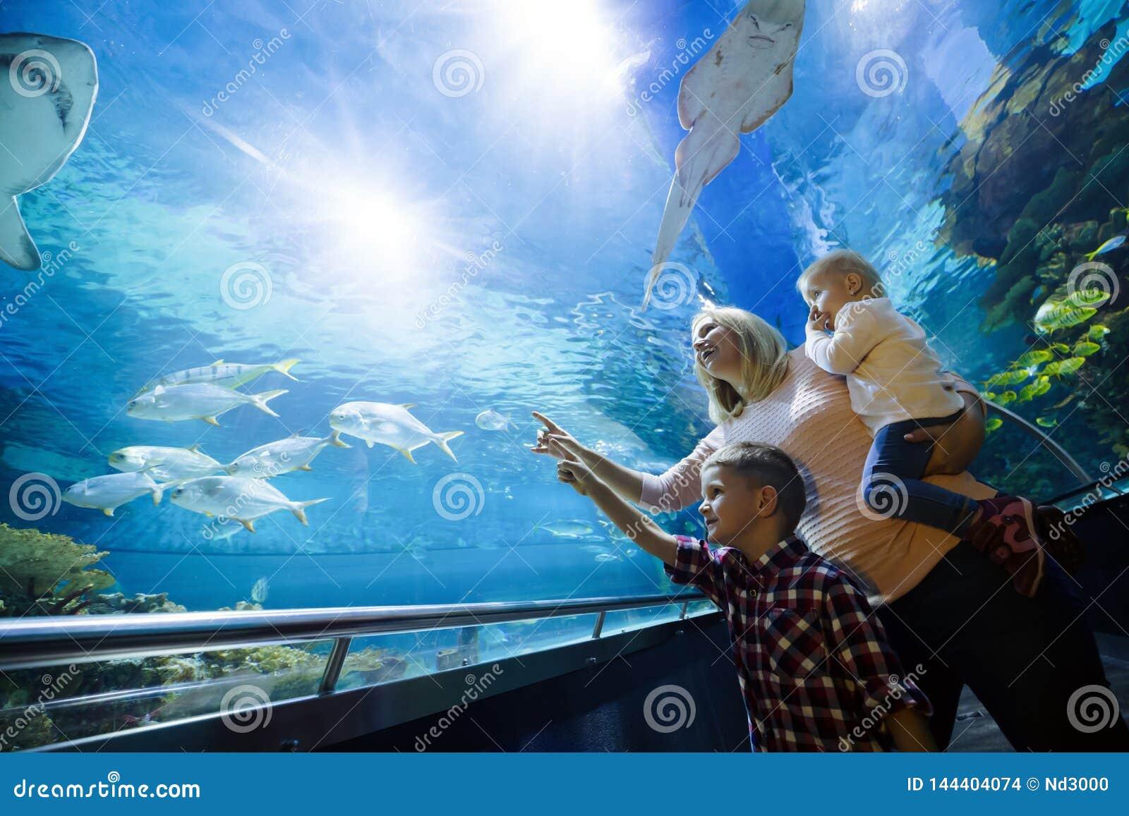 Lycklig familj som ser fiskbeh?llaren p? akvariet