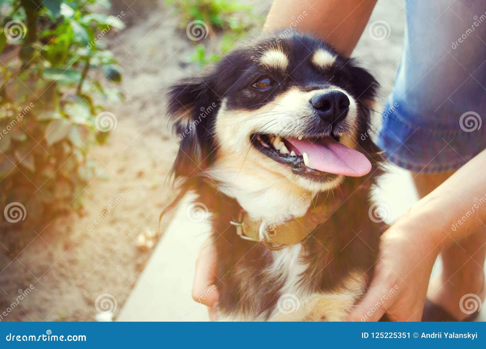 Lycklig fri tid med den älskade hunden! grabben spelar med ett husdjur i det trädgårds-/parkerar på en solig dag Svart vovve frit