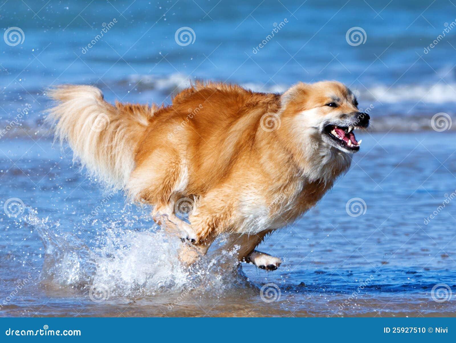 Lycklig running hund